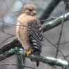 Birds : 10 galleries with 82 photos